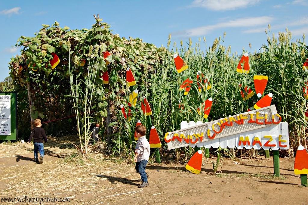 Sweet Berry Farm Austin