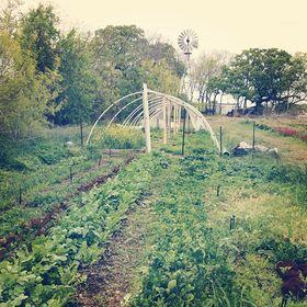 Green Gate Farm Austin